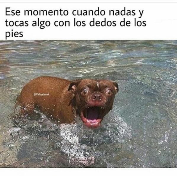 imagenes y memes chistosos 2016 - perro asustado