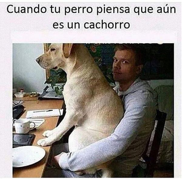 imagenes y memes chistosos 2016 - perro y su dueno