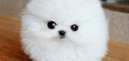 memes de guapos - perrito
