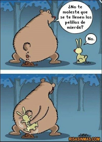 memes de osos - chiste