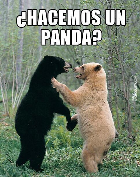 memes de osos - hacemos un panda