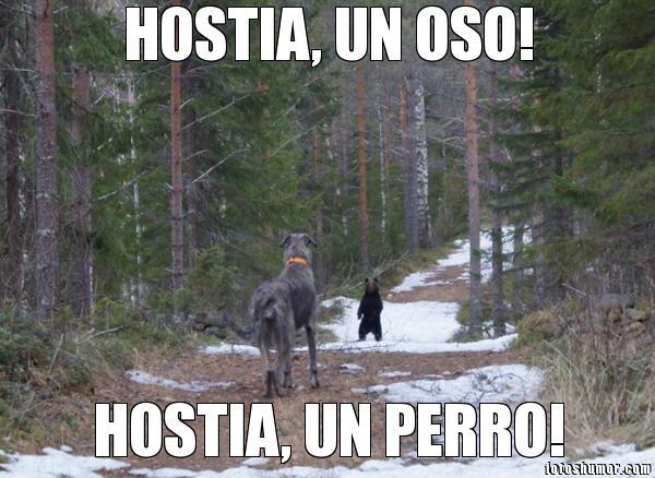 memes de osos - hostia