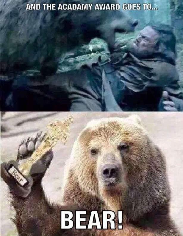 memes de osos - leonardo dicaprio