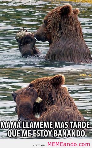 memes de osos - luego te llamo mama