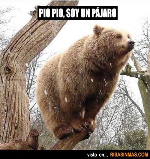 memes de osos - oso pajaro