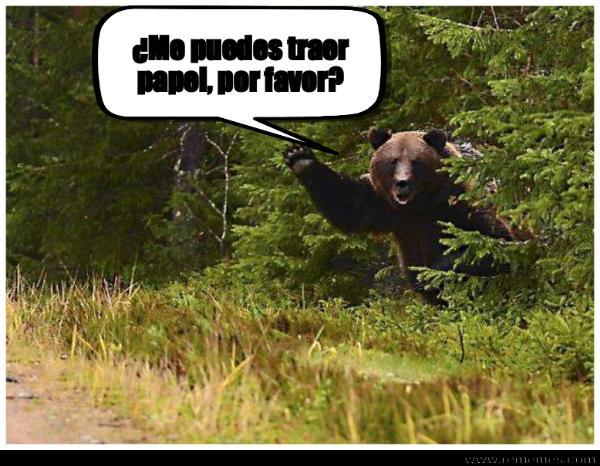 memes de osos - papel