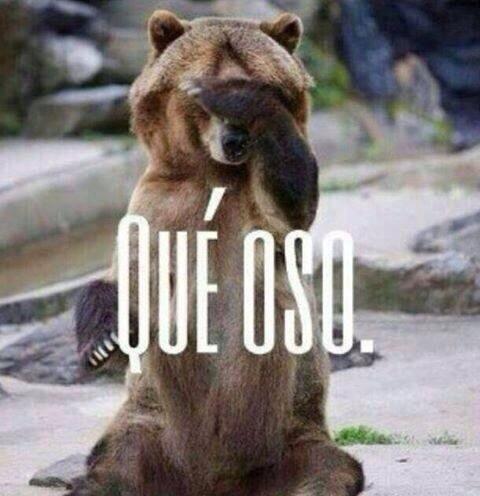 memes de osos - que oso