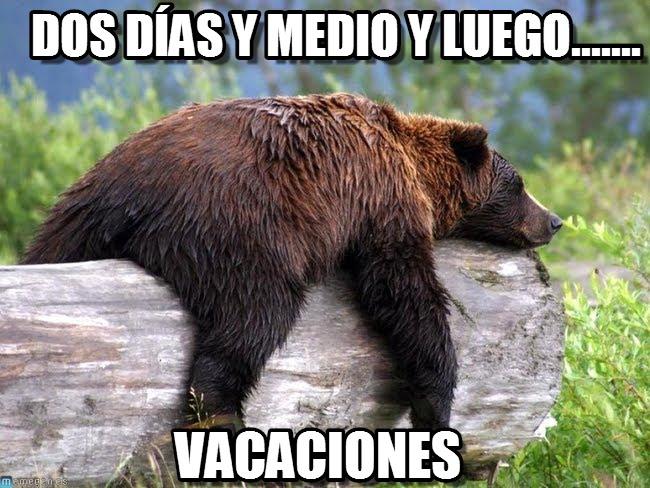 memes de osos - vacaciones