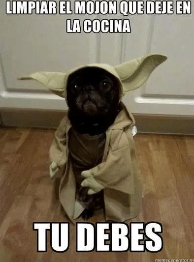memes de yoda - perro