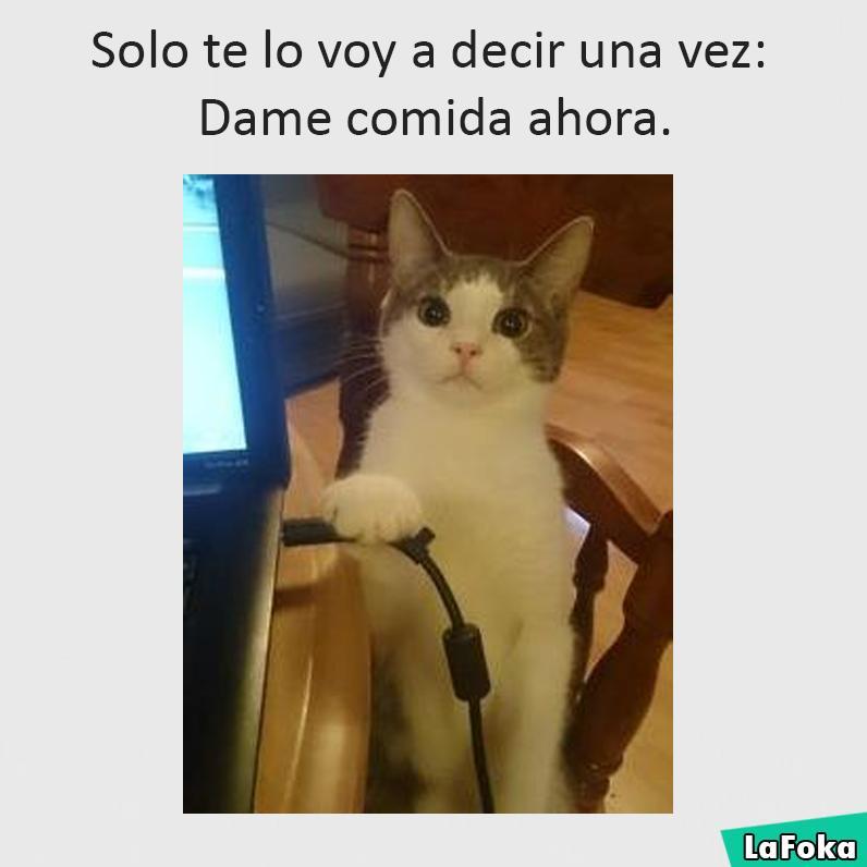 nuevas imagenes chistosas 2016 - amenaza de gato