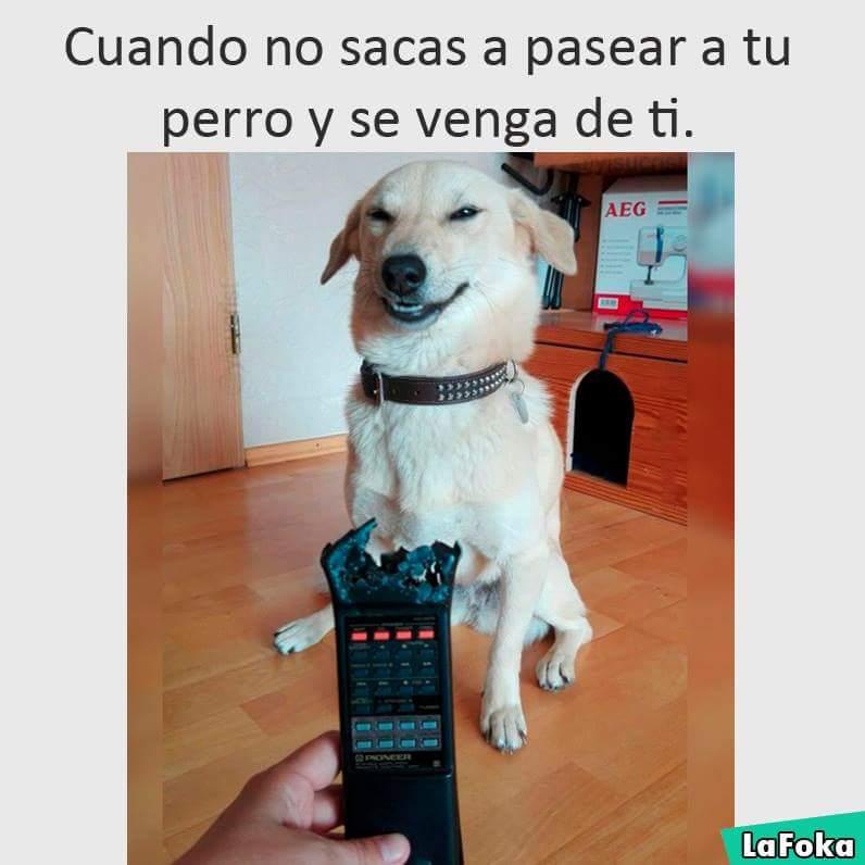 nuevas imagenes chistosas 2016 - perro