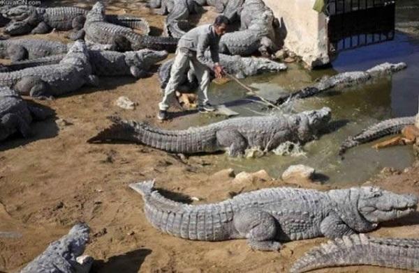 imagenes-graciosas-que-explican-porque-las-mujeres-viven-mas-que-los-hombres-con-cocodrilos