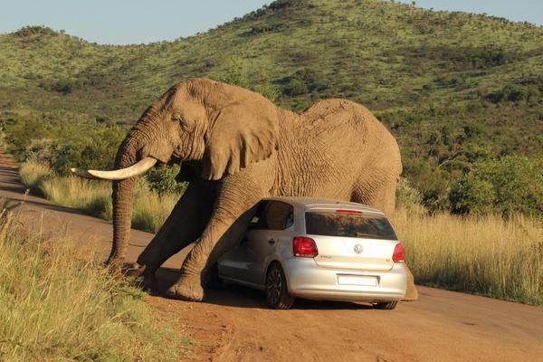 imagenes raras y graciosas a la ves - elefante