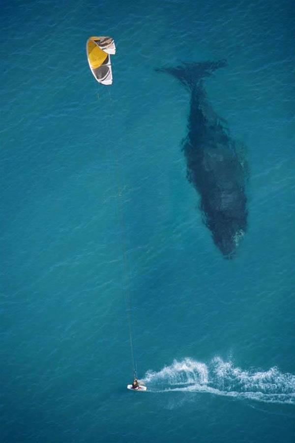 imagenes-chistosas-e-increibles-tomadas-en-el-momento-exacto-ballena