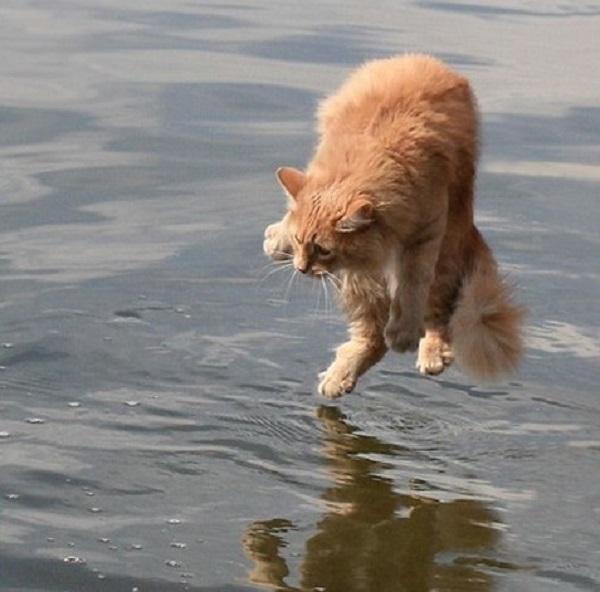 imagenes-chistosas-e-increibles-tomadas-en-el-momento-exacto-gato-al-agua