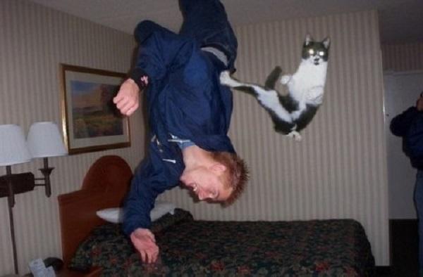 imagenes-chistosas-e-increibles-tomadas-en-el-momento-exacto-gato