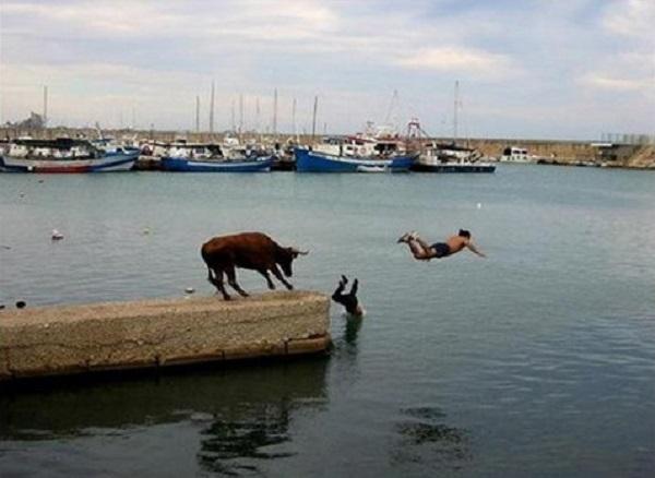 imagenes-chistosas-e-increibles-tomadas-en-el-momento-exacto-torro-salto