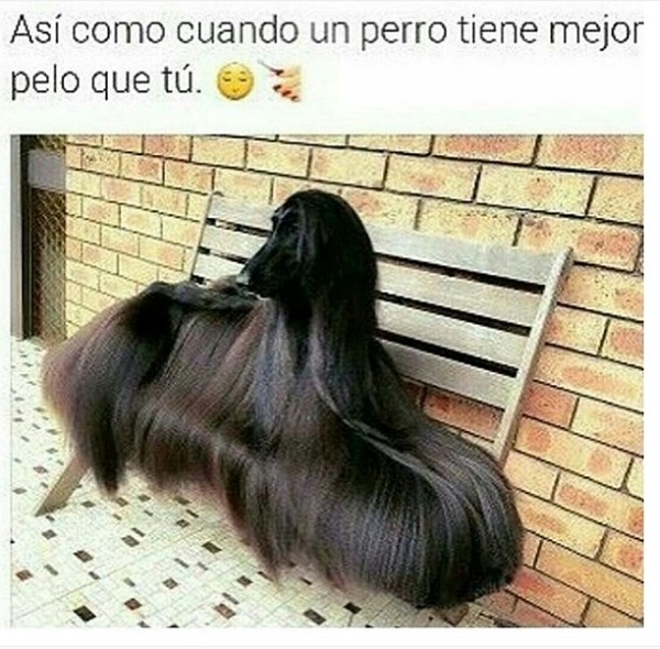 imagenes-graciosas-para-whatsapp-cuando-un-perro-tiene-mejor-pelo