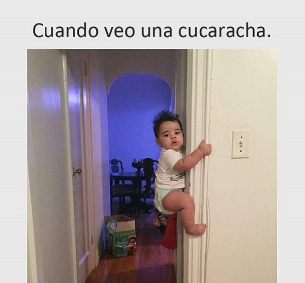 imagenes-graciosas-para-whatsapp-cuando-veo-una-cucaracha