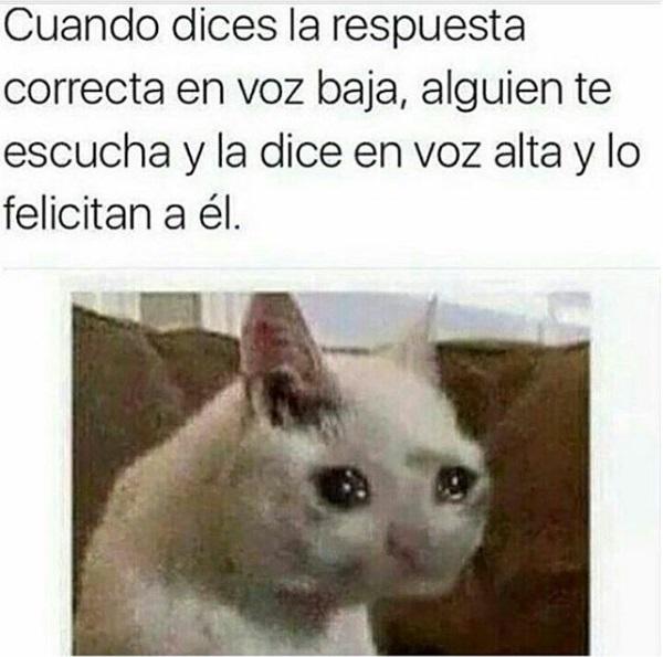 imagenes-graciosas-para-whatsapp-gato-llorando