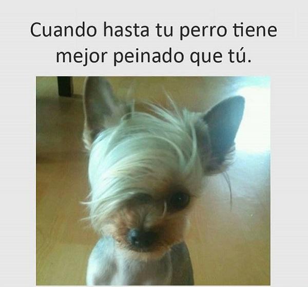 imagenes-graciosas-para-whatsapp-perro-con-pelo-bueno