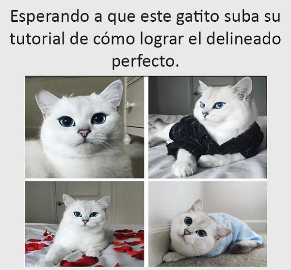 imagenes-y-chistes-graciosas-gatito-bello