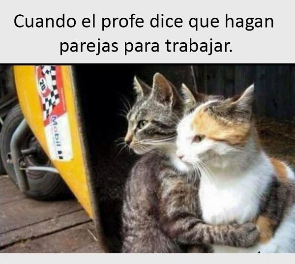 imagenes-y-chistes-graciosas-gatos