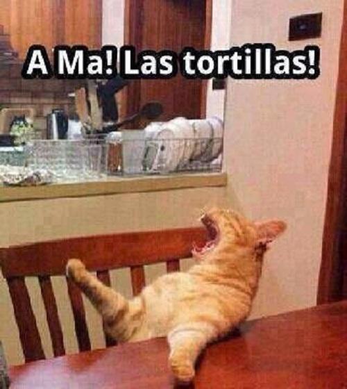 memes-de-tortillas-ama-las-tortillas