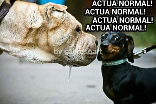 memes-de-actua-normal-perros