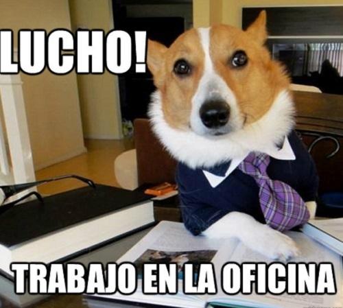 memes-de-oficina-trabajo-de-oficina