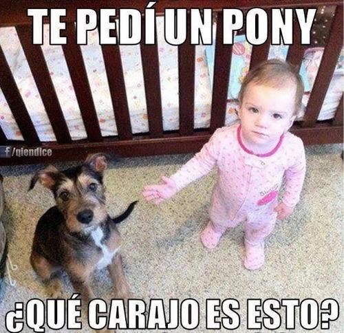 memes-de-regalos-pedi-un-poni