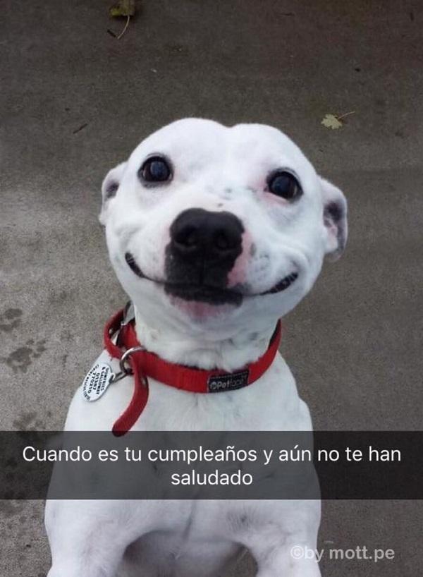 nuevas-imagenes-y-chistes-graciosos-para-reir-perro