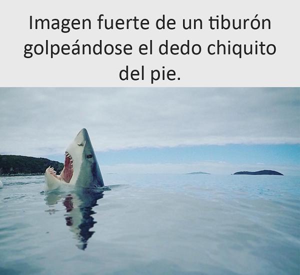 nuevas-imagenes-y-chistes-graciosos-para-reir-tiburon
