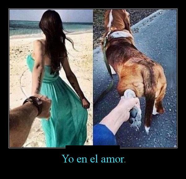 memes-de-yo-en-el-amor-amor-por-mi-perro