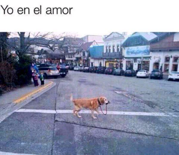 memes-de-yo-en-el-amor-perro-amor