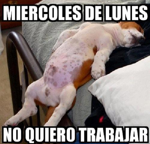 memes de no quiero trabajar - perro