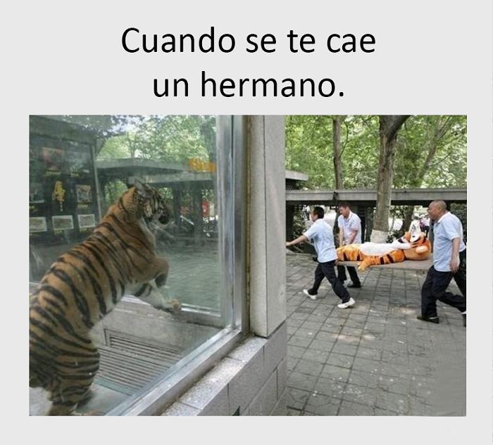 nuevos-memes-e-imagenes-chistosas36