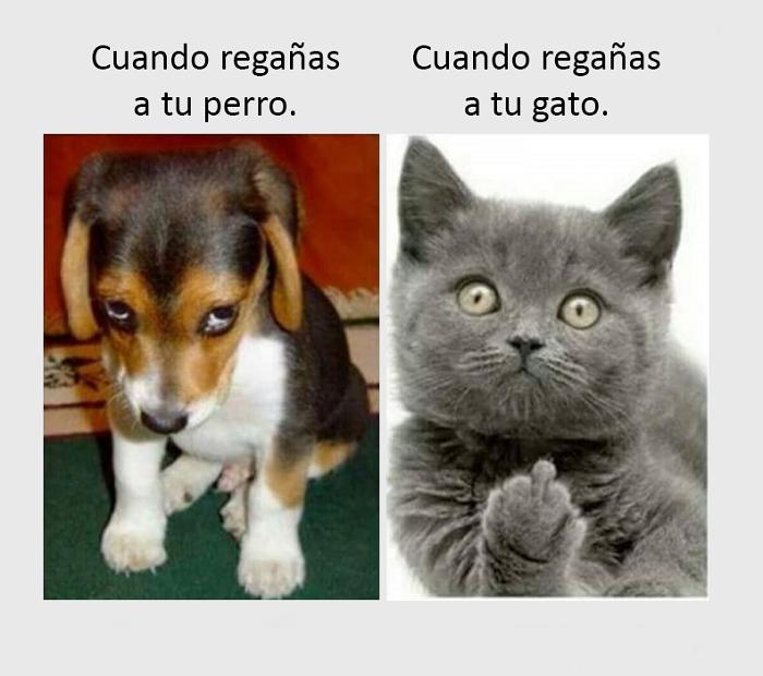 nuevos-memes-e-imagenes-chistosas37