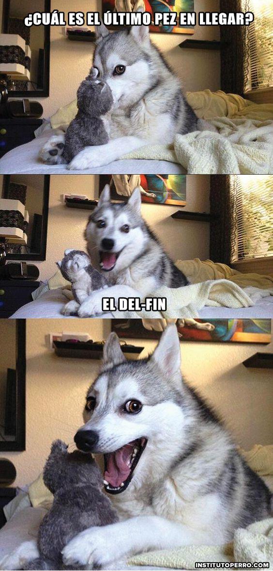 memes de humor5